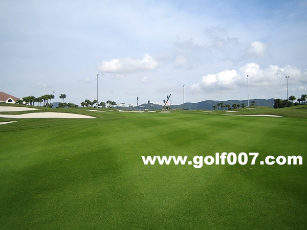 GoldenGulf-H27-3